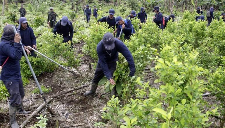 cultivos ilicito Colombia